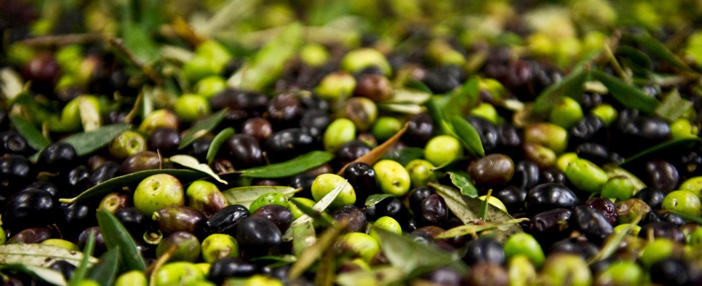 Selezioniamo le migliori olive